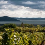 balaton domaine viticole