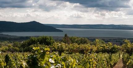 De l'apéritif au dessert… Sur le chemin des vins hongrois